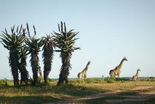 temba game reserve grahamstown accommodation 20